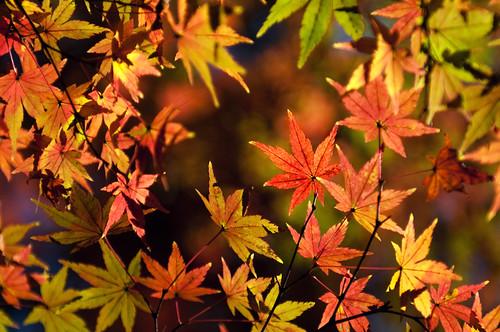 Autumn leaves | Rikugien, Tokyo by jamesjustin