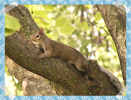 Tree-hugging squirrel