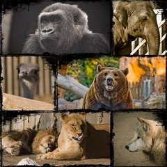 Zoo de Madrid (Nino S.) Tags: naturaleza collage oso leon tele avestruz lobo animales elefante composicion