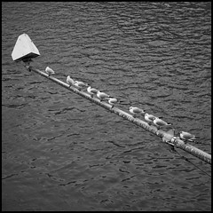 (Georgios Karamanis) Tags: sea bw white black water birds river germany square frankfurt gulls pole karamanis