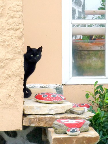 Gato negro que olla