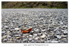 Cross the road (Gabriel Fotografa) Tags: espaa naturaleza art nature spain europe arte shot pentax earth asturias bugs fotografia tierra insecto pantax pentaxk10d worldsartgallery fotografiaynaturaleza objetivosigms105mm pentax55200mm photographyandnature gabrielfotografia
