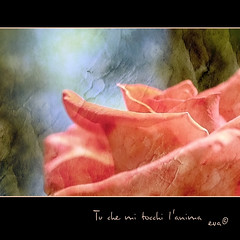 Tu che mi tocchi l'anima (in eva vae) Tags: pink light stilllife macro art beauty rose eva framed touch crop soul squared textured selectbestexcellence sailsevenseas sbfmasterpiece inevavae