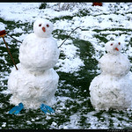 Pingouins dans les champs, hiver méchant thumbnail