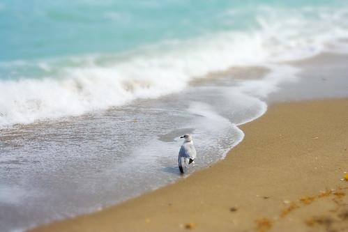 tilt shift seagull