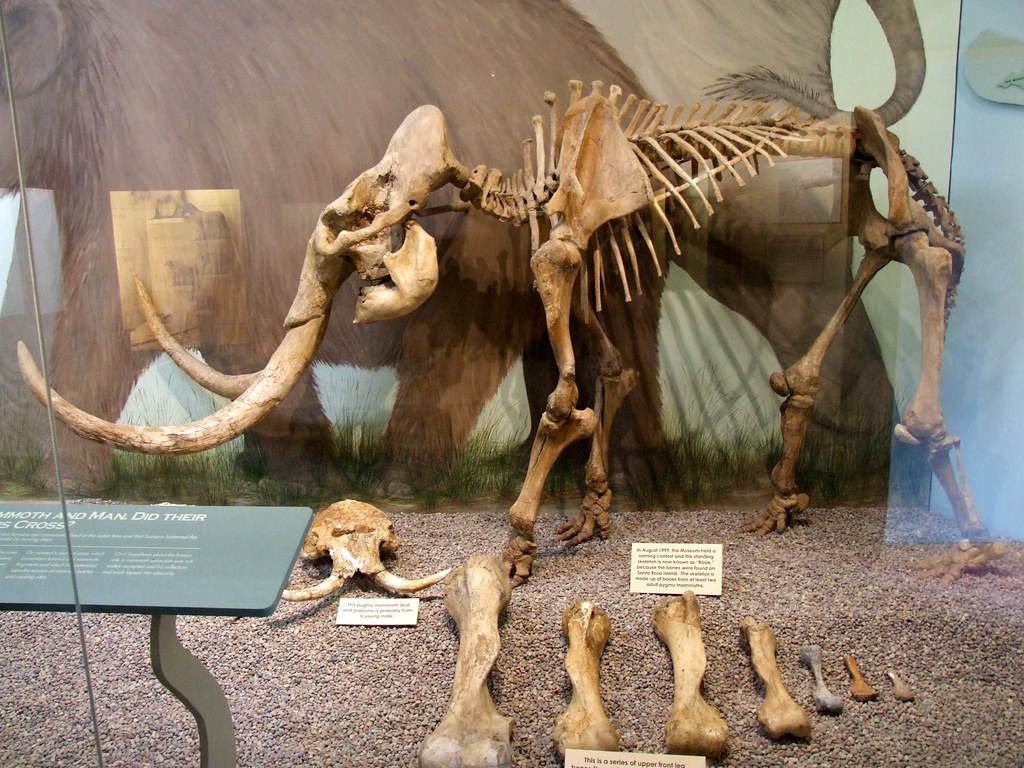 Why Did the Woolly Mammoth Die Out?