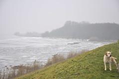 ijs en mist bij  ijsselmeer (johan wieland) Tags: winter ice labrador ijsselmeer 2010 ijs bowy kruien kruiendijs kruiend