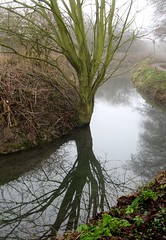 Bend in the river (shaggy359) Tags: cambridge mist reflection tree corner river cherry branch bend path bank hinton cherryhinton steram mtrtrophyshot