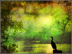 When Time Stood Still (jackaloha2) Tags: trees reflection heron nature water silhouette photoshop glare swamp layer vegitation primal abigfave texturedlayer tatot artofimages saariysqualitypictures bestcapturesaoi jackaloha2