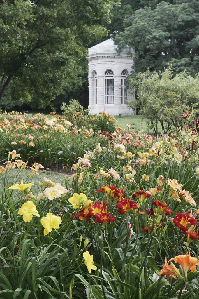 Jenkins Daylily Garden