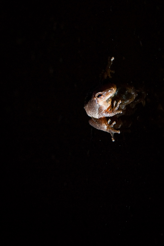 Day 152: Frog on Glass