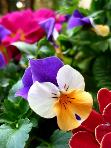 fioriera