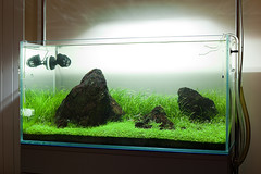 90x45x45cm Planted Aquarium - March (Stu Worrall Photography) Tags: fish nature rock nose aquarium ada lily tank pipe slate hc rummy aquascape planted tetras hardscape tennelus stuworrall ukapsorg 90x45x45cm