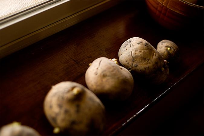 potatoes 3-16-10