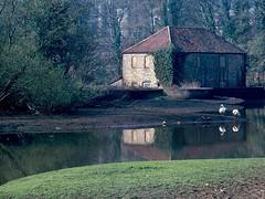 Willsbridge Mill pre 1968 (zarker1960) Tags: cadbury heath 1960s