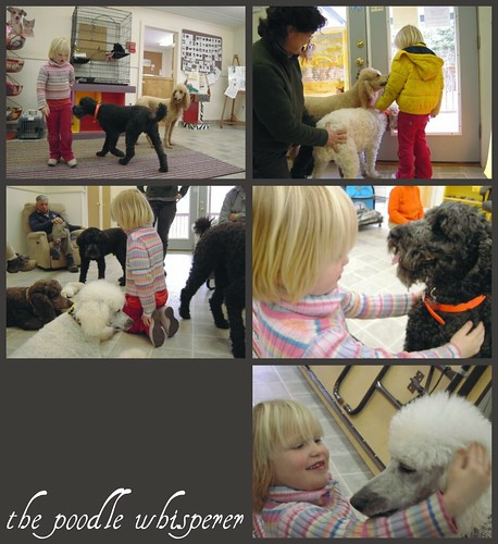 i went to a poodle party