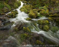 Seasonal Creek, El Portal.  April 13, 2010 (Robert Pearce Photography) Tags: california green water creek landscape waterfall moss spring rocks stream sierra yosemite april 2010 mercedriver yosemiteblog elportal flowingwater nikond200 sierrasolstice robertpearce robertpearcephotography