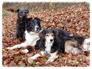 Rambo, Livia, Betsy