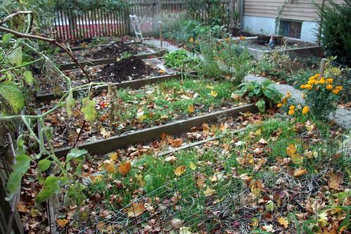 winter prep gardens