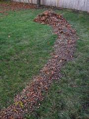 Acorn path