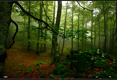 Mist in the forest (mila41) Tags: theunforgettablepictures updatecollection