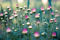Happy December! (Ashu Mittal) Tags: flowers india flower green nature garden nikon dof bokeh delhi depthoffield photoaday 2009 d40 bokehlicious nikond40 flickroom ashumittal ashumittalphotography donotcopyitwillbebadkarma copyrightashumittal 35mmf18nikkor