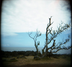 Reunion Island (Etienne Despois) Tags: travel beach reunion square island holga