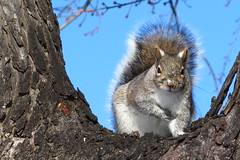 Holy Squirrel Batman! (zJMac) Tags: light ontario canada canon river squirrel ottawa attitude lonely rideau zjmac