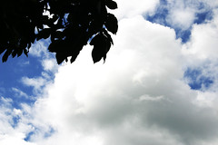(erika michele d.) Tags: summer camp sky cloud tree leave nature smile leaves happy nice day peace time clear plain campecho 12722 burlingham