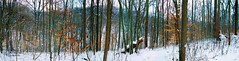 Looking In To The Snowy Woods (Chipmunk Hill Arts) Tags: indiana monroecounty katiewolfe chipmunkhill
