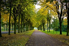 Rotterdam in the Fall (Fotis Korkokios) Tags: autumn tree fall beautiful leaves rotterdam europe path fallcolors thenetherlands autumncolors urbanlandscape fallenleaves kralingen beautifulcolours canon450d fostis canonxsi scenicfall