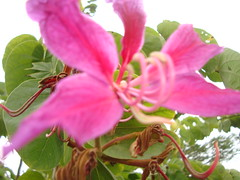 http://farm3.static.flickr.com/2753/4266015314_5415b56a0a_m.jpg