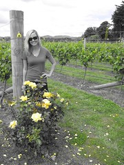Ata Rangi Vineyard Rose Bush