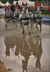 Four in Hand in Reflection (Foto Martien) Tags: horses horse holland netherlands dutch sport speed championship driving power action marathon nederland fei event wk 2008 spectator exciting worldchampionship watcher paard paarden gelderland beesd betuwe snelheid sightseer wereldkampioenschap aktie thrilling fourinhand a350 marinwaerdt vierspan sonyalpha350 martienuiterweerd carlzeisssony1680 landbouwfair martienarnhem mygearandme mygearandmepremium martienholland mygearandmebronze