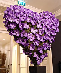 The Grove Hotel 05/02/10 (Ken Marten) Tags: flowers winter orchid london moss purple heart lounge valentine structure vanda watford floristry moderndesign bluemagic mcqueens thegrovehotel kenmarten contemporaryarrangement waterphial