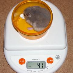 コー太は体重減少