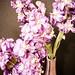45/365: Valentine's Flowers