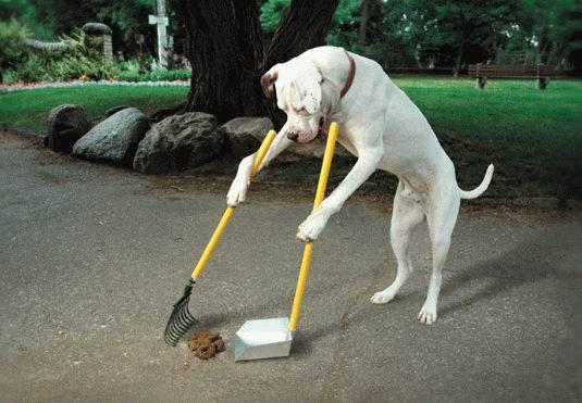 개 배설물
