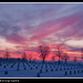 Sunrise at Fort Snelling National Cemetery, Minneapolis, MN