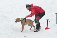 Lawinenkurs 2010 (kameraschwein) Tags: training avalanche lawine rescuedog rettungshund