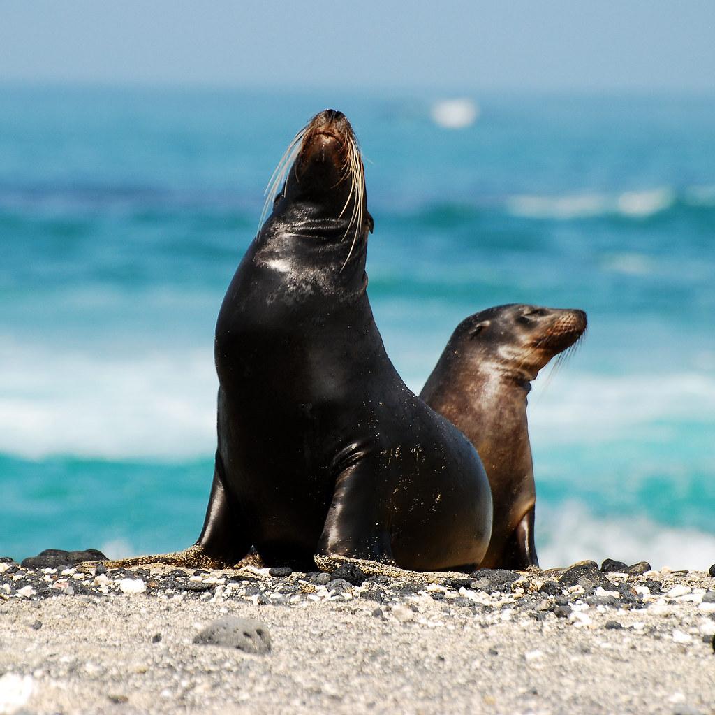 Galapagos Islands-691