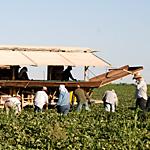 メキシコ系季節労働者