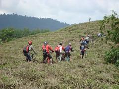 cianten, tea plantation