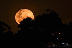 Moon Illusion over the Suburbs (duffohyeah) Tags: fullmoon moonrise moonillusion