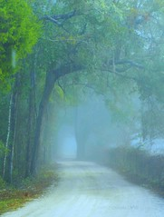 Misty Morning (gatorgalpics) Tags: explore wonderworld anawesomeshot overtheexcellence pursuingyourpassion photocontestcog09 appreciationandconservationofnature