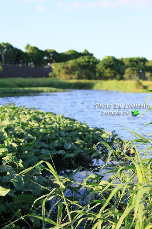 Tamron A09試拍測試 光華玉市 樹林鹿角溪溼地