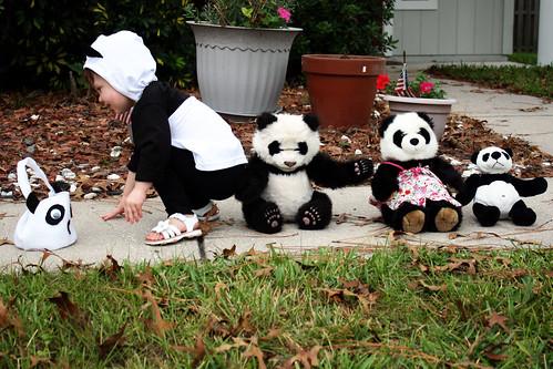 Look! It's a panda family!