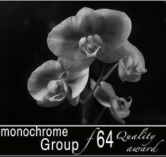 monochromef64qualityaward
