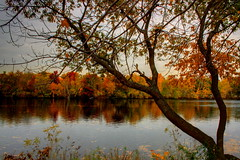 Colors in the Fall. (RajRem) Tags: park autumn trees red sky orange lake green nature leaves yellow boston clouds reflections river bench landscape ma evening leaf scenery colorful skies display fallcolors massachusetts charlesriver shoreline scenic dramatic autumnleaves autumncolors fallfoliage foliage glorious rays beautifulcolors hdr sunray colorsoffall themes phenomenon bostonist distortions fallleaf leafcolors photomatix fallweather autumninnewengland newenglandfall fallphotos colorfultrees newenglandfoliage canon400d canondigitalrebelxti fallbloom autumnoffering newenglandfallfoliage charlesrivercambridge leaveschangecolor rajrem fallfoliagetours autumnmonths usfallfoliage fallcolorsandautumncolors fallcolorseason colorinthefall followingthefall fallcolorsintheus thebeautyoffallfoliage