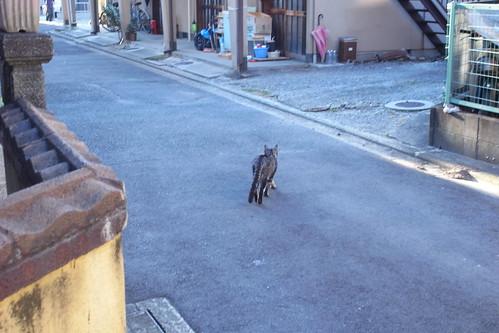 Today's Cat@20091108